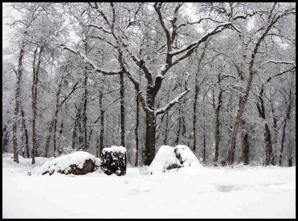 snowback