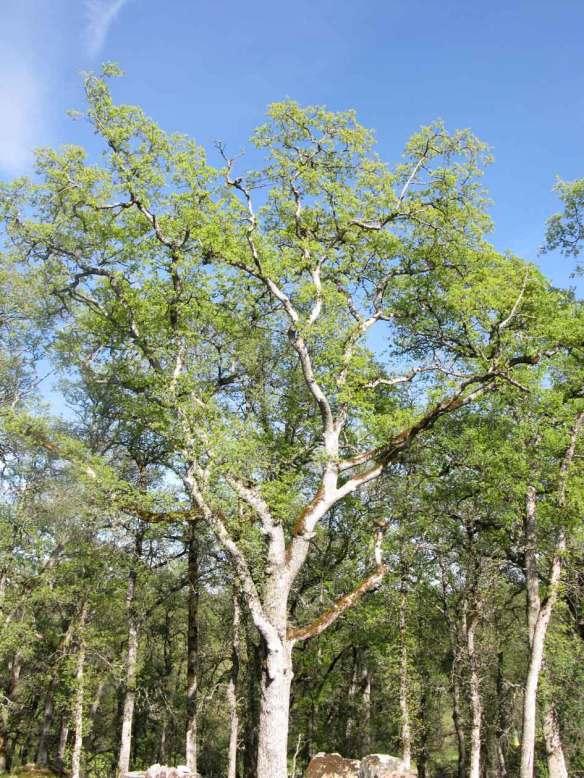 spring-tree1