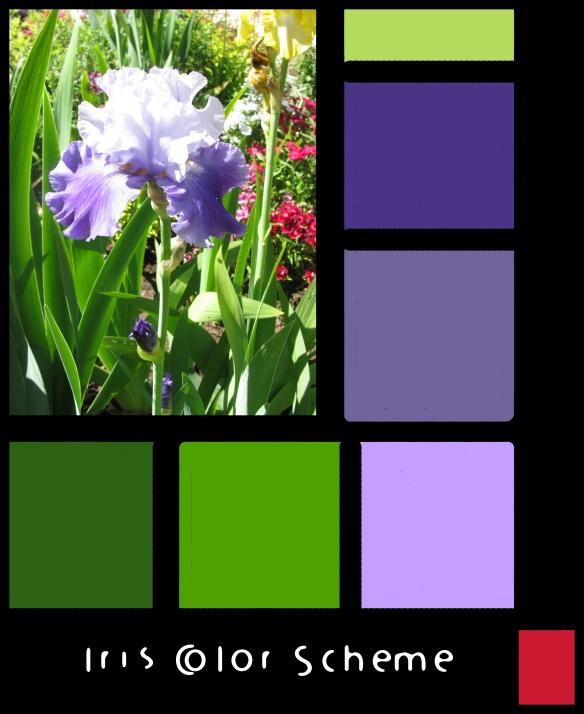 iris color scheme