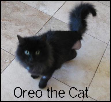 cat keyhole lingerie